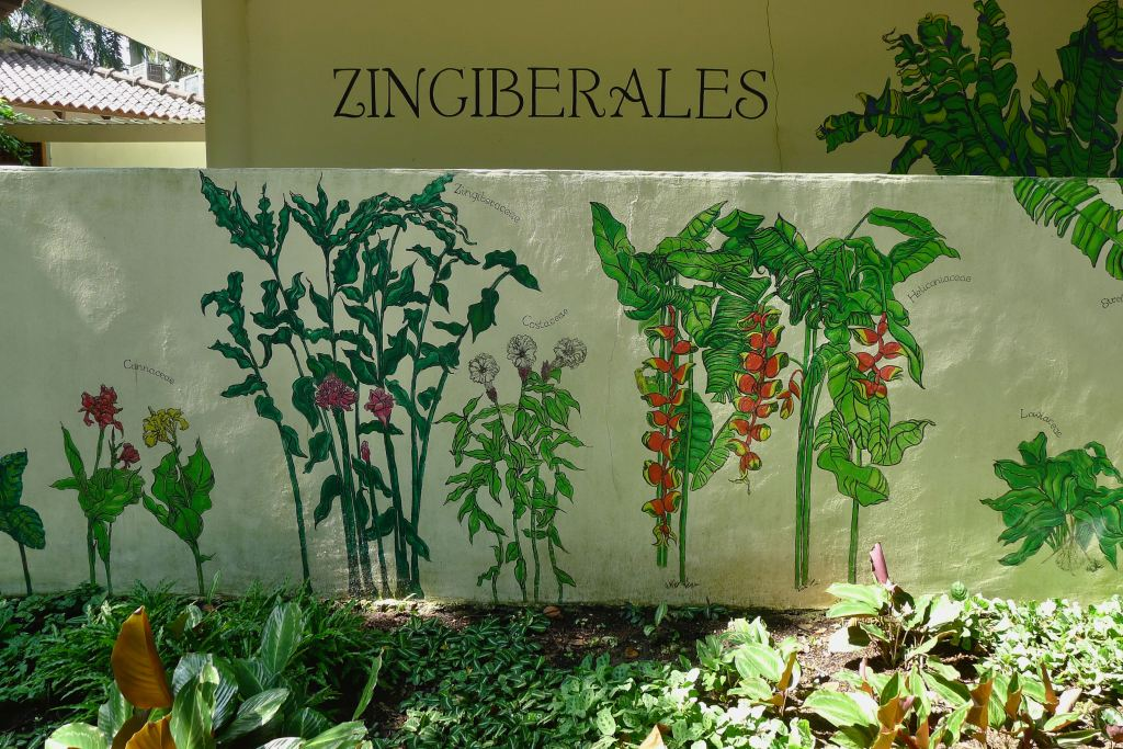 Mural of the Zingiberales.