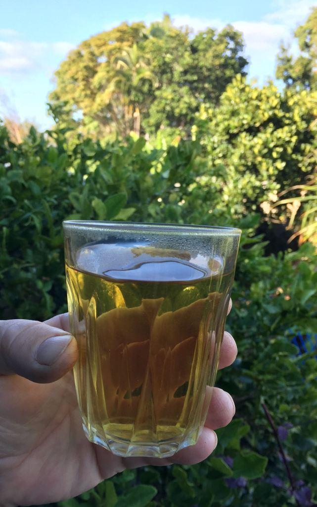Fukein tea, Ehretia microphylla - 4