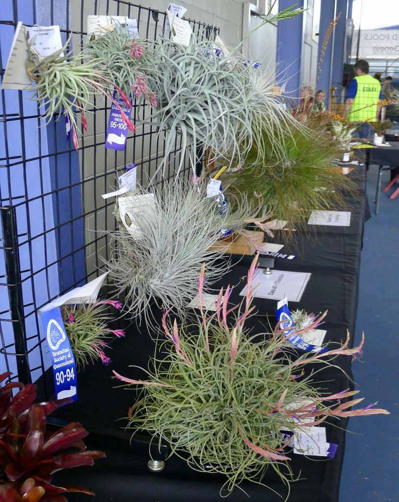 Queensland Bromeliad Society